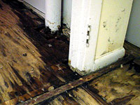 Basement Wood Rot | Everdry Waterproofing Detroit
