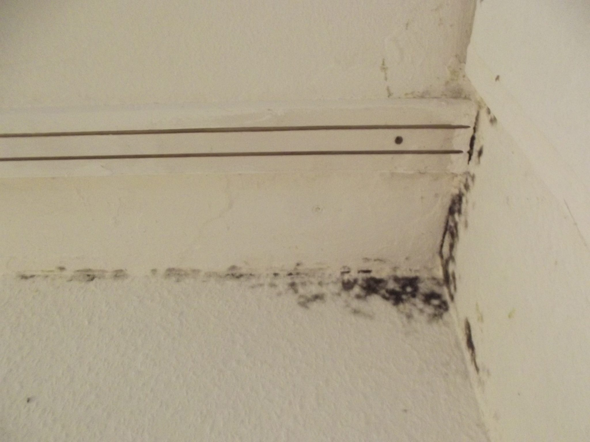 spot treat black mold in your home basement waterproofing
