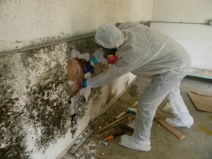 black mold in basement | Sterling Heights, MI | Everdry Waterproofing of S.E. Michigan