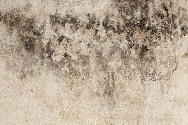 Signs of toxic black mold and how to deal with them - How to deal with mold ...