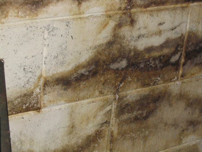 Prevent Basement Mold