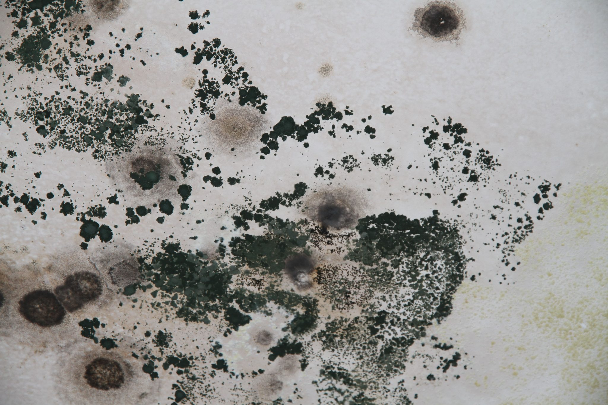 Toxic Black Mold 101