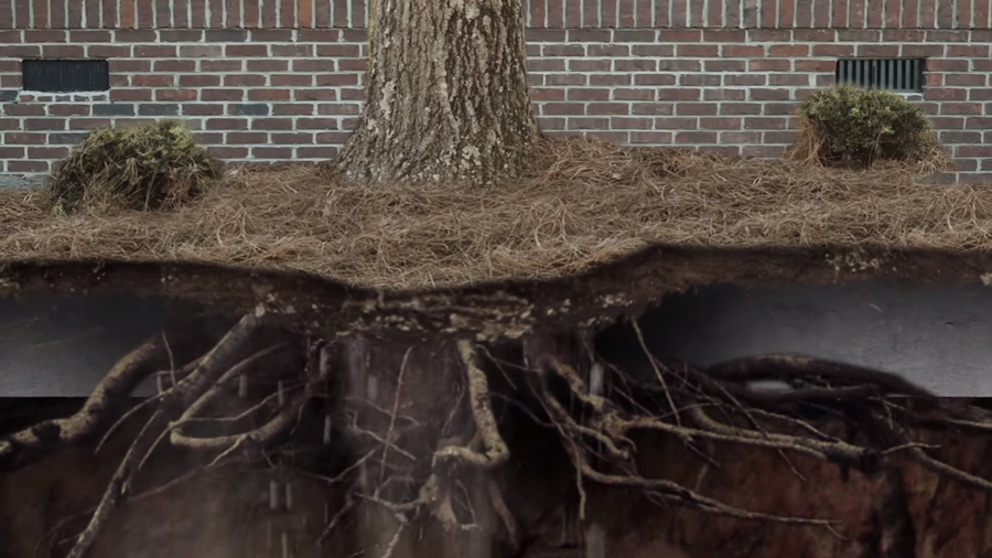 The Impact of Tree Roots on Crawlspace Waterproofing – Sterling Heights, MI